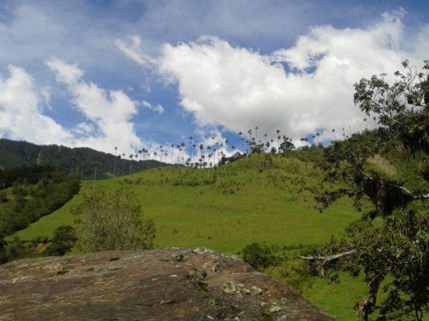 Valle de cocora en Salento