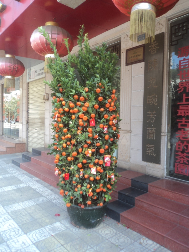 Tipico arbol decorativo en China