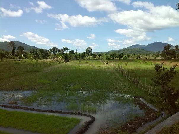 Campos de arroz en Bali